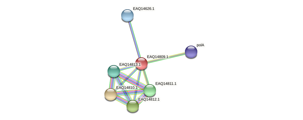 RB2654_19538 protein (Maritimibacter alkaliphilus) - STRING interaction network