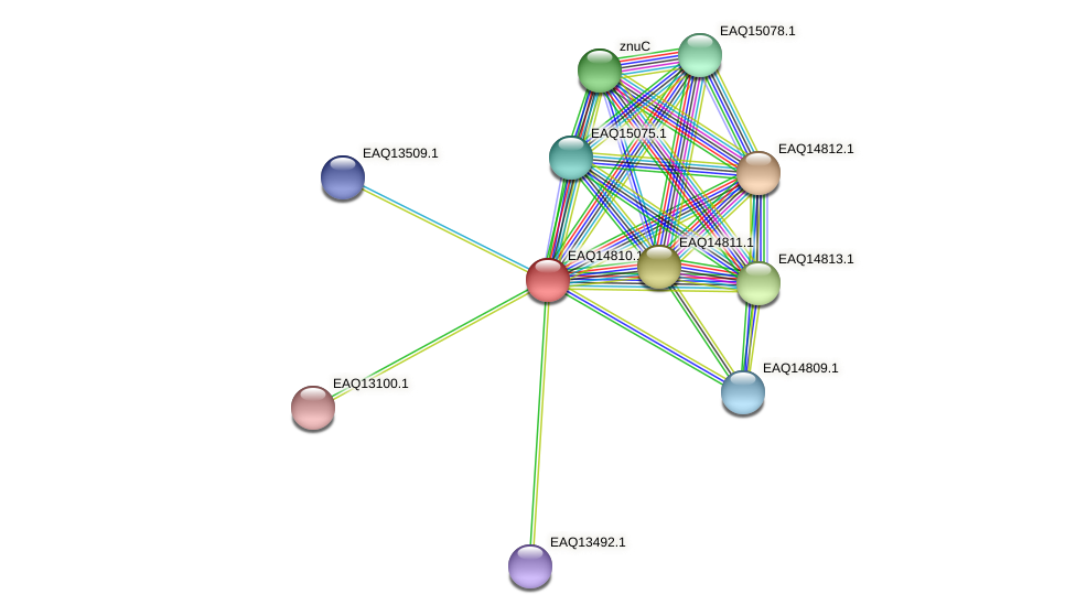 RB2654_19543 protein (Maritimibacter alkaliphilus) - STRING interaction network