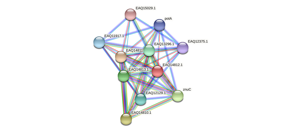 RB2654_19553 protein (Maritimibacter alkaliphilus) - STRING interaction network