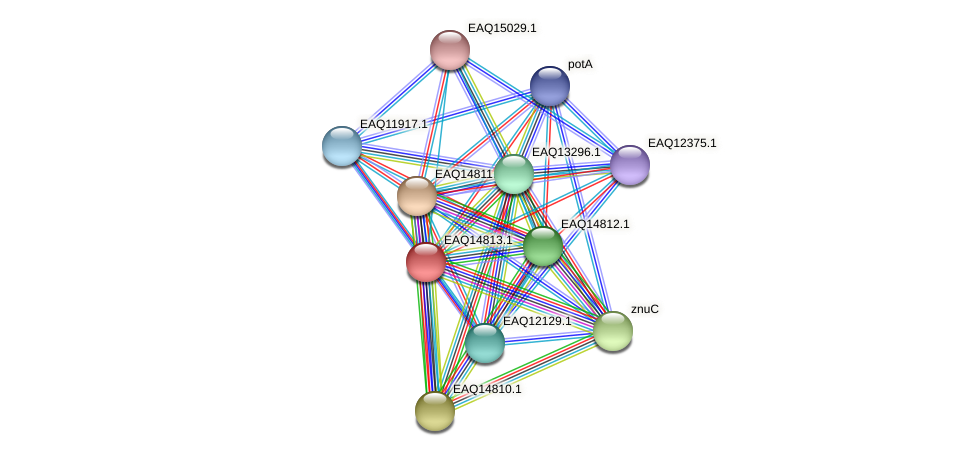 RB2654_19558 protein (Maritimibacter alkaliphilus) - STRING interaction network