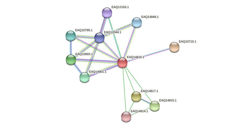 RB2654_19573 protein (Maritimibacter alkaliphilus) - STRING interaction network