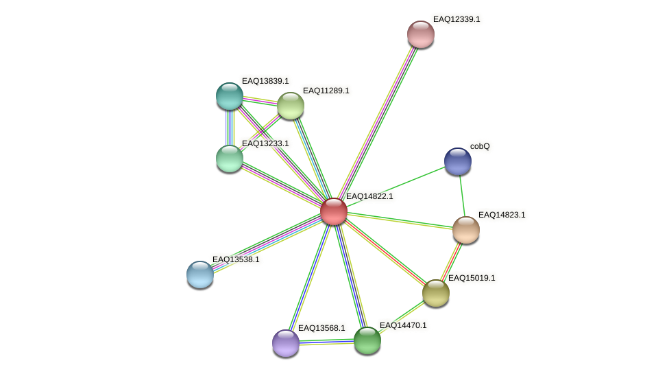 RB2654_19603 protein (Maritimibacter alkaliphilus) - STRING interaction network