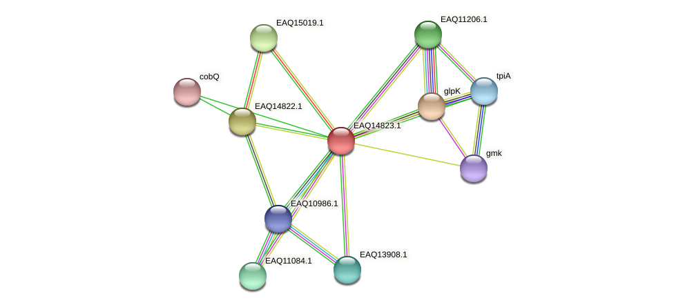RB2654_19608 protein (Maritimibacter alkaliphilus) - STRING interaction network