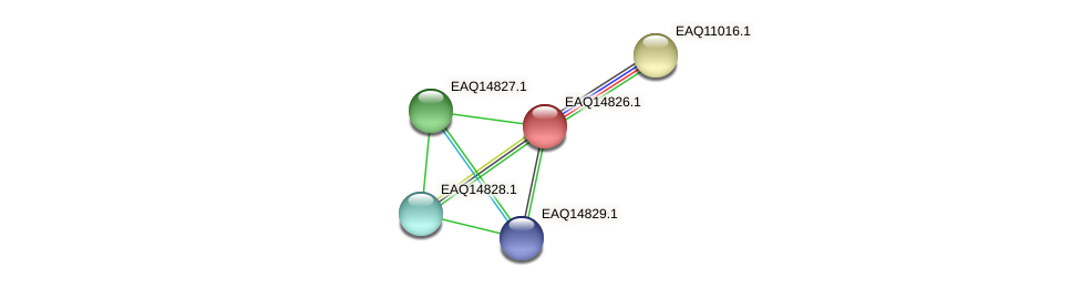 RB2654_19623 protein (Maritimibacter alkaliphilus) - STRING interaction network