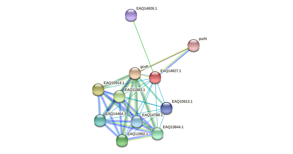 RB2654_19628 protein (Maritimibacter alkaliphilus) - STRING interaction network