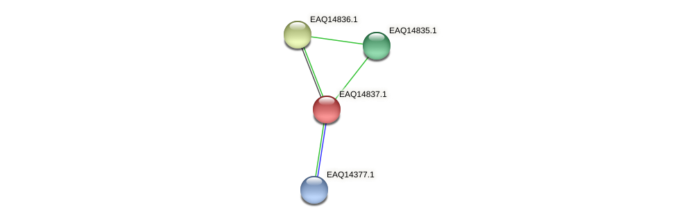 RB2654_19678 protein (Maritimibacter alkaliphilus) - STRING interaction network