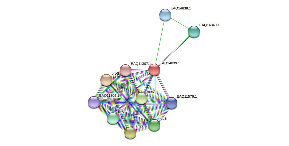 RB2654_19688 protein (Maritimibacter alkaliphilus) - STRING interaction network