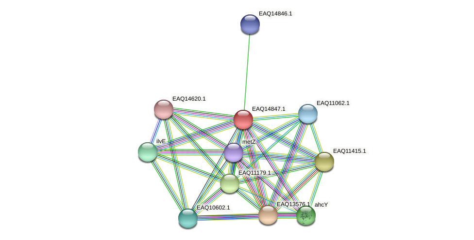 RB2654_19728 protein (Maritimibacter alkaliphilus) - STRING interaction network