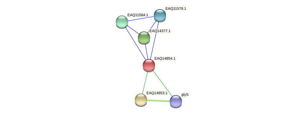 RB2654_19763 protein (Maritimibacter alkaliphilus) - STRING interaction network