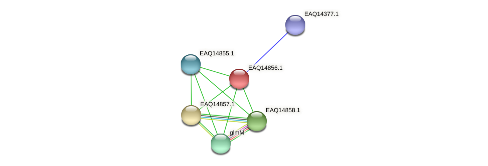 RB2654_19773 protein (Maritimibacter alkaliphilus) - STRING interaction network