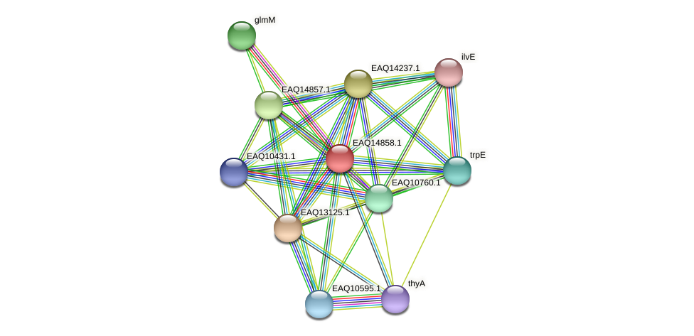 RB2654_19783 protein (Maritimibacter alkaliphilus) - STRING interaction network