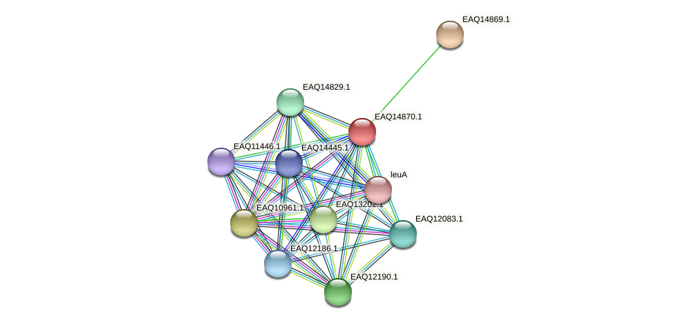 RB2654_19843 protein (Maritimibacter alkaliphilus) - STRING interaction network
