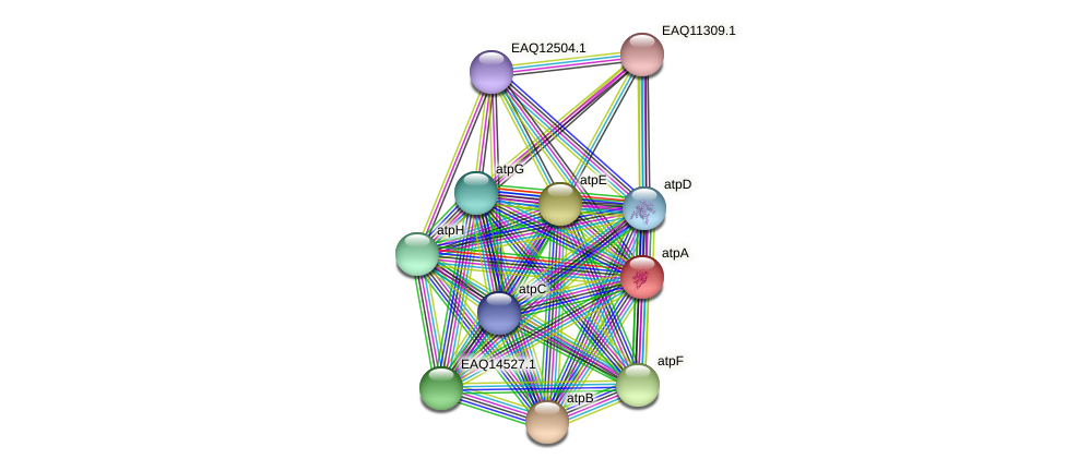 atpA protein (Maritimibacter alkaliphilus) - STRING interaction network
