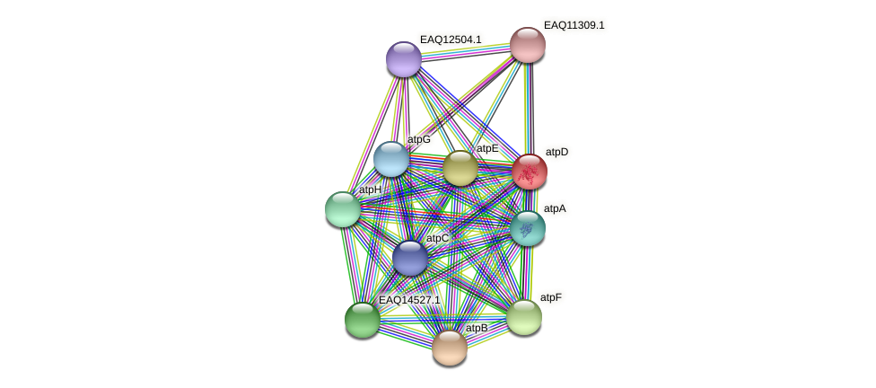 atpD protein (Maritimibacter alkaliphilus) - STRING interaction network