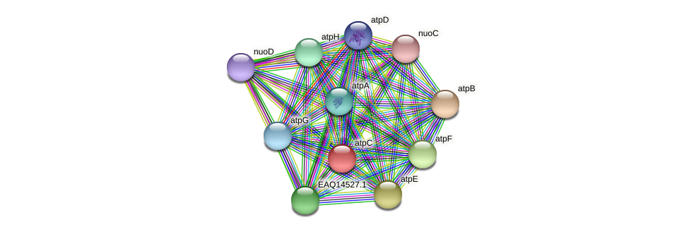 atpC protein (Maritimibacter alkaliphilus) - STRING interaction network