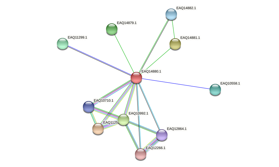 RB2654_19893 protein (Maritimibacter alkaliphilus) - STRING interaction network