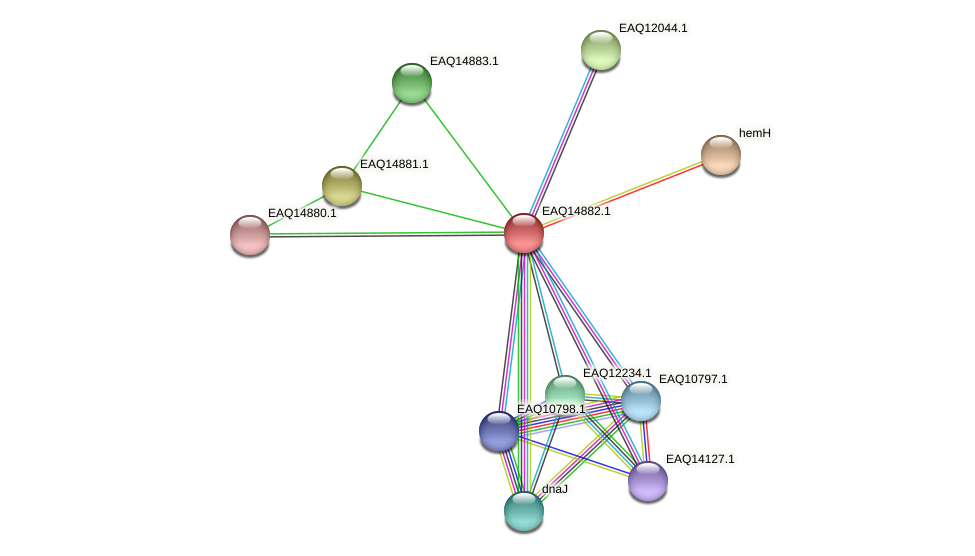 RB2654_19903 protein (Maritimibacter alkaliphilus) - STRING interaction network
