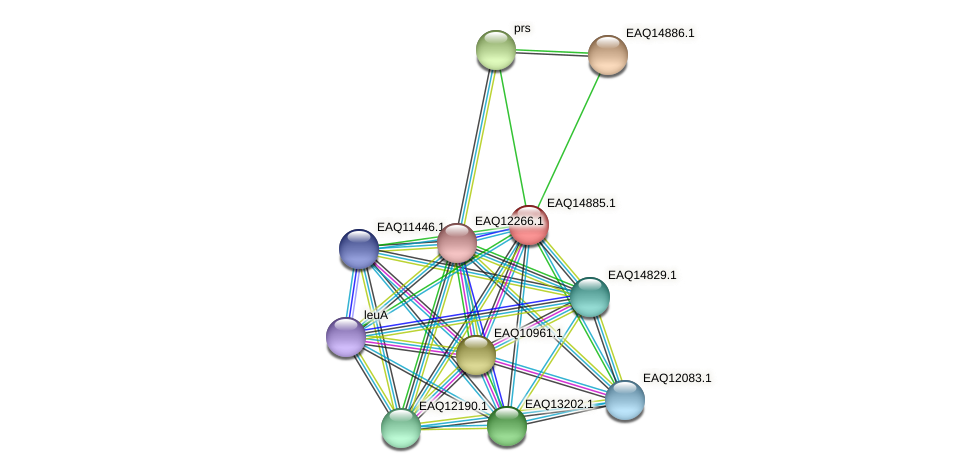 RB2654_19918 protein (Maritimibacter alkaliphilus) - STRING interaction network