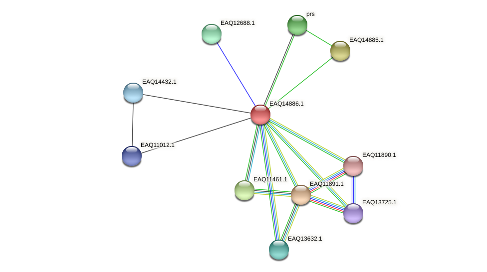 RB2654_19923 protein (Maritimibacter alkaliphilus) - STRING interaction network
