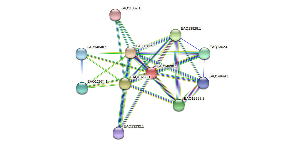 RB2654_19943 protein (Maritimibacter alkaliphilus) - STRING interaction network