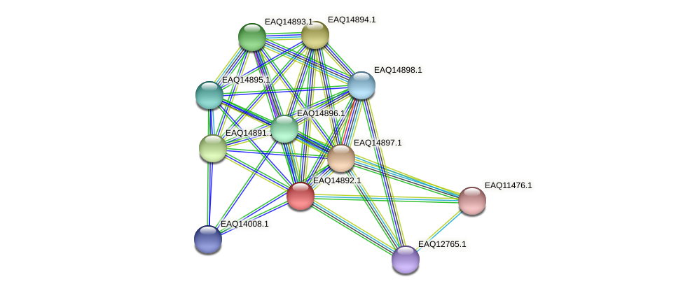 RB2654_19953 protein (Maritimibacter alkaliphilus) - STRING interaction network