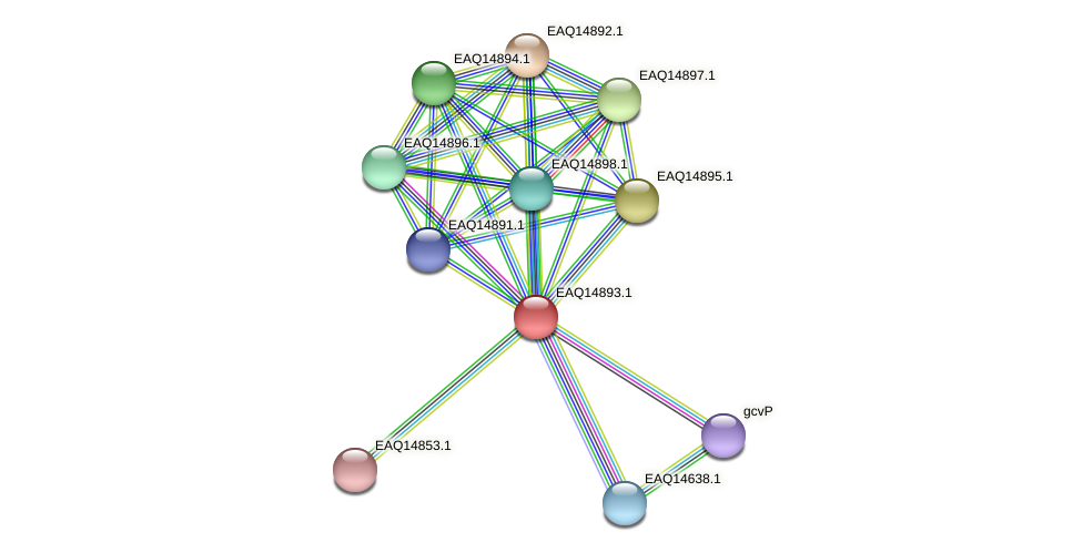 RB2654_19958 protein (Maritimibacter alkaliphilus) - STRING interaction network