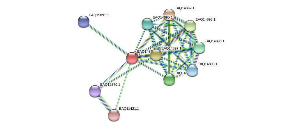 RB2654_19963 protein (Maritimibacter alkaliphilus) - STRING interaction network