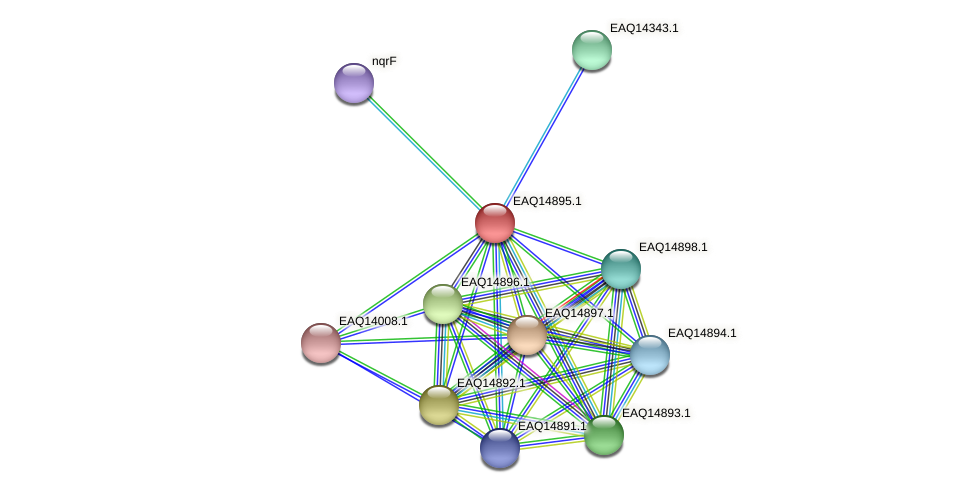 RB2654_19968 protein (Maritimibacter alkaliphilus) - STRING interaction network