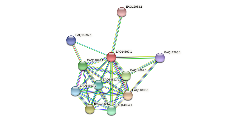 RB2654_19978 protein (Maritimibacter alkaliphilus) - STRING interaction network