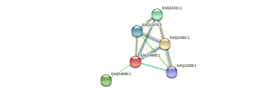 RB2654_19993 protein (Maritimibacter alkaliphilus) - STRING interaction network