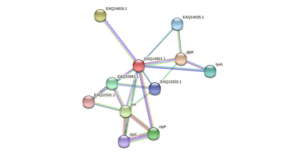 RB2654_19998 protein (Maritimibacter alkaliphilus) - STRING interaction network