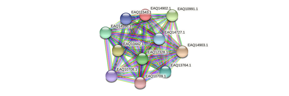 RB2654_20003 protein (Maritimibacter alkaliphilus) - STRING interaction network