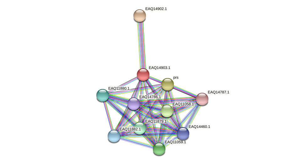 RB2654_20008 protein (Maritimibacter alkaliphilus) - STRING interaction network