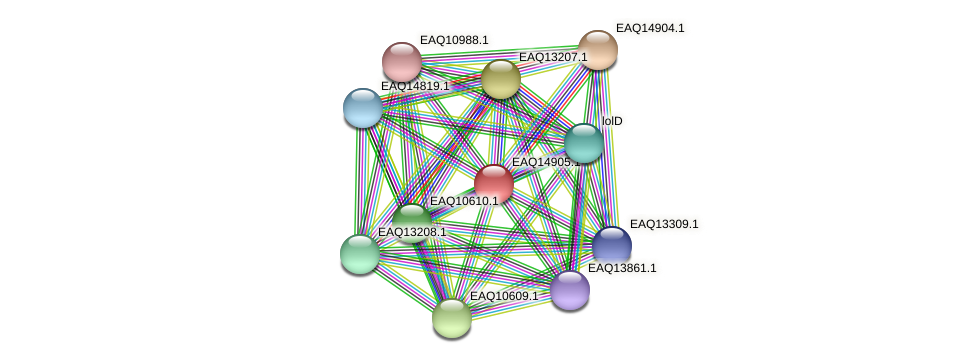 RB2654_20018 protein (Maritimibacter alkaliphilus) - STRING interaction network