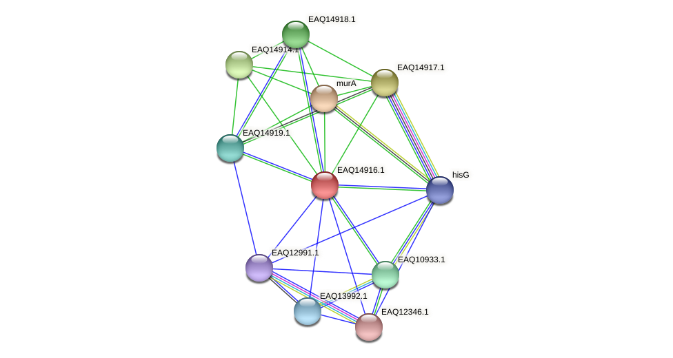 RB2654_20073 protein (Maritimibacter alkaliphilus) - STRING interaction network