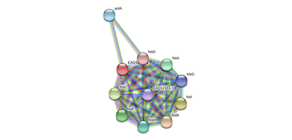 RB2654_20078 protein (Maritimibacter alkaliphilus) - STRING interaction network