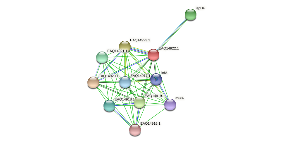 RB2654_20103 protein (Maritimibacter alkaliphilus) - STRING interaction network