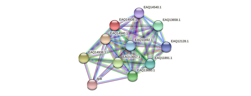 RB2654_20188 protein (Maritimibacter alkaliphilus) - STRING interaction network