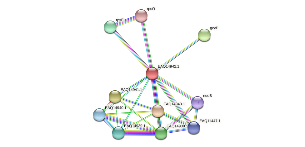 RB2654_20203 protein (Maritimibacter alkaliphilus) - STRING interaction network