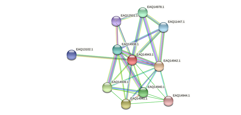 RB2654_20208 protein (Maritimibacter alkaliphilus) - STRING interaction network