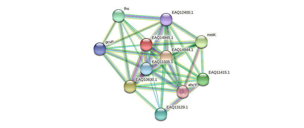 RB2654_20218 protein (Maritimibacter alkaliphilus) - STRING interaction network