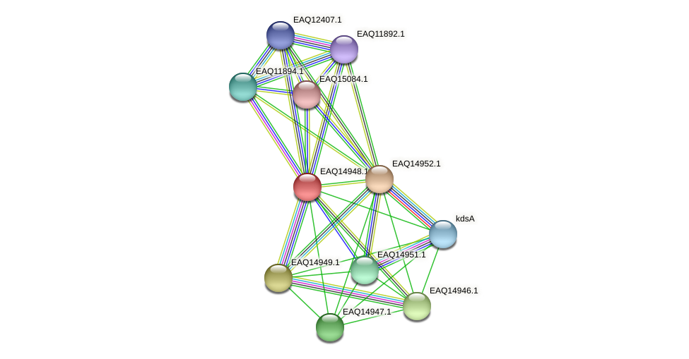 RB2654_20233 protein (Maritimibacter alkaliphilus) - STRING interaction network