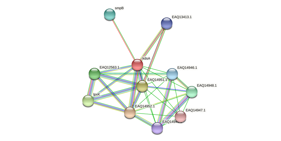 kdsA protein (Maritimibacter alkaliphilus) - STRING interaction network