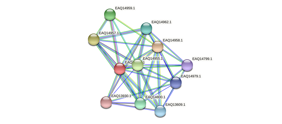 RB2654_20273 protein (Maritimibacter alkaliphilus) - STRING interaction network