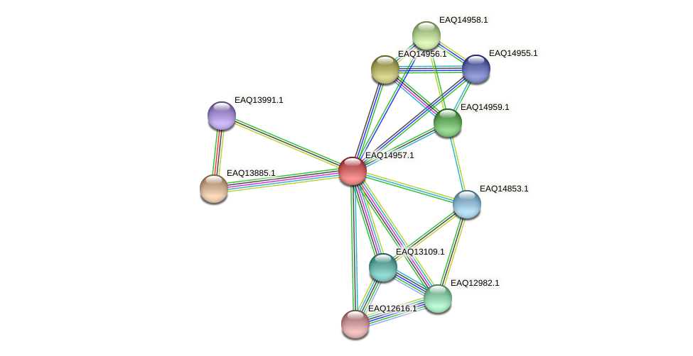 RB2654_20278 protein (Maritimibacter alkaliphilus) - STRING interaction network