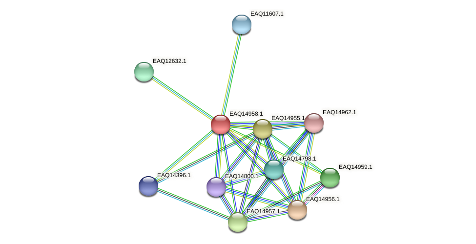 RB2654_20283 protein (Maritimibacter alkaliphilus) - STRING interaction network