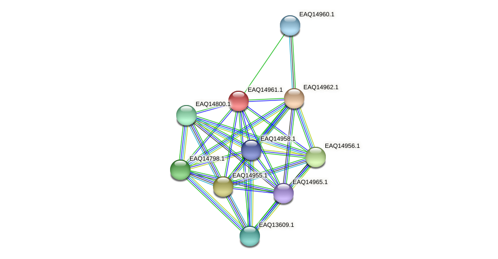 RB2654_20298 protein (Maritimibacter alkaliphilus) - STRING interaction network