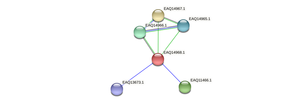 RB2654_20333 protein (Maritimibacter alkaliphilus) - STRING interaction network