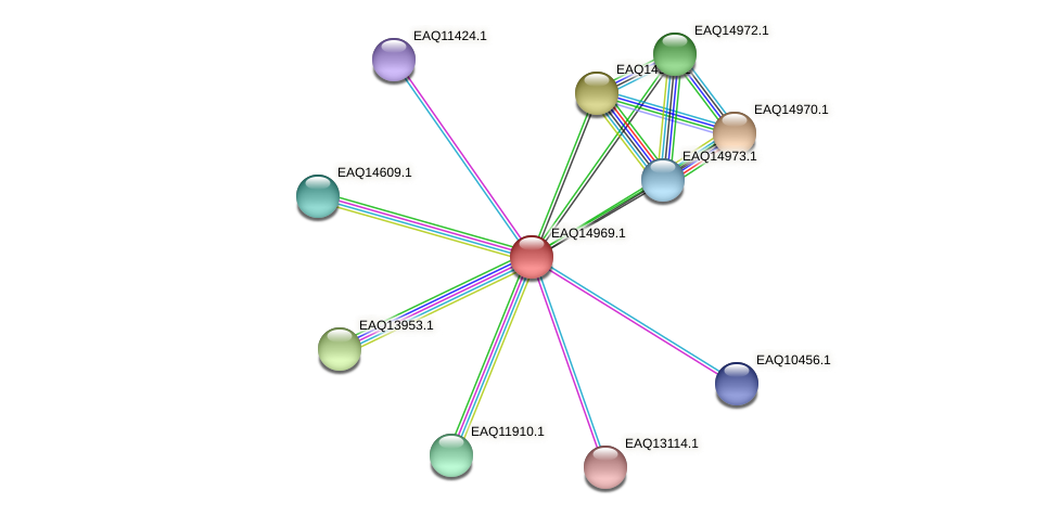 RB2654_20338 protein (Maritimibacter alkaliphilus) - STRING interaction network