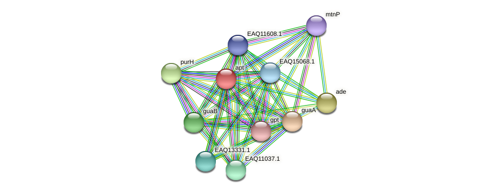 apt protein (Maritimibacter alkaliphilus) - STRING interaction network